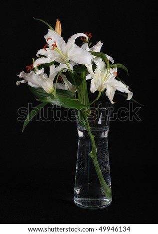 Decorative flower, white lily, beautiful and fragrant - stock photo