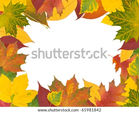 Decorative frame from multi-colored autumn leaves