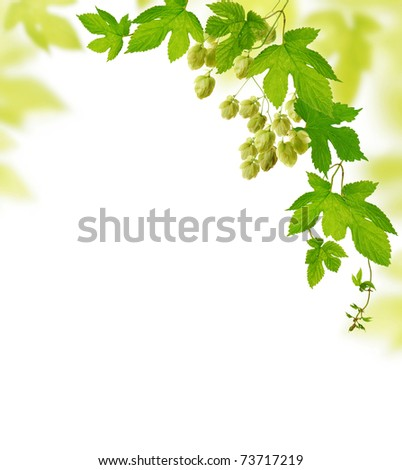 Decorative frame with fresh hop branches, isolated on white background - stock photo