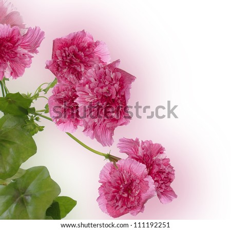 Decorative garden beautiful flowers rose on a blur abstract pink background