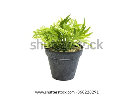 Decorative grass in flowerpot, House plant on a white background,Isolated on white background - stock photo