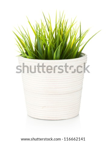 Decorative grass in flowerpot. Isolated on white background - stock photo