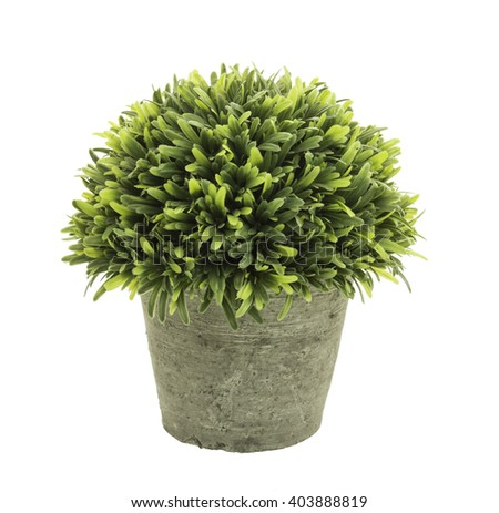 Decorative grass in flowerpot isolated on white background. - stock photo