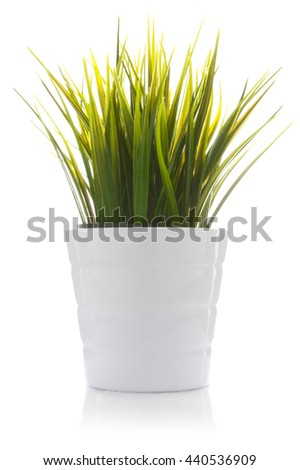 Decorative grass in flowerpot isolated on white background - stock photo