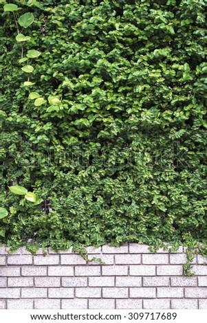 Decorative green garden on a brick wall