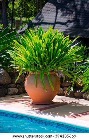 Decorative large huge terracotta pot of tropical foliage