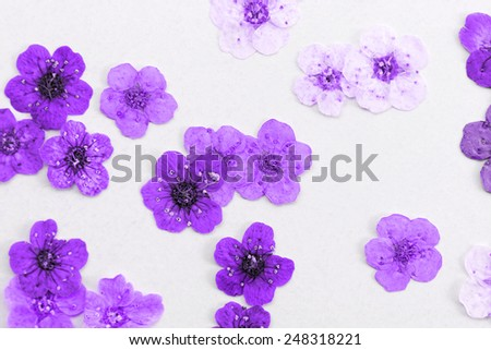 Decorative montage compilation of colorful dried spring flowers (magenta) - stock photo
