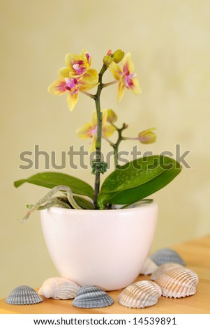 Decorative orchid on table - stock photo