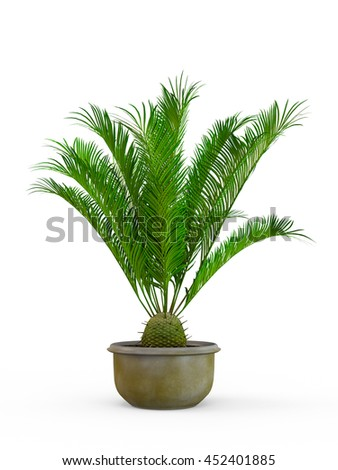 Decorative palm tree bush isolated on white background. 3D Rendering, Illustration.