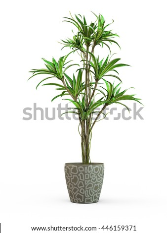 Decorative palm tree isolated on white background. 3D Rendering, Illustration.