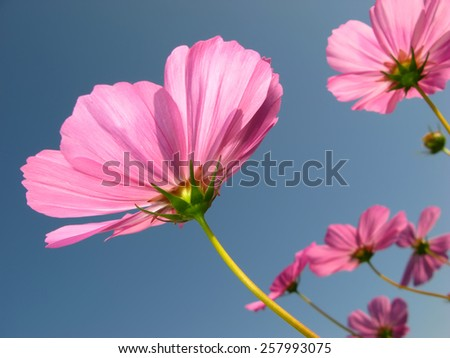 decorative pink flower against the blue sky in the garden