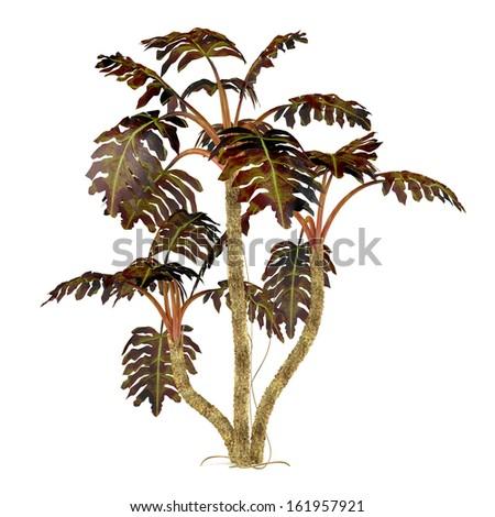 decorative plant palm - stock photo