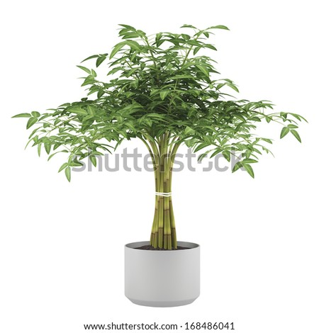 Decorative plant tree in the ball pot