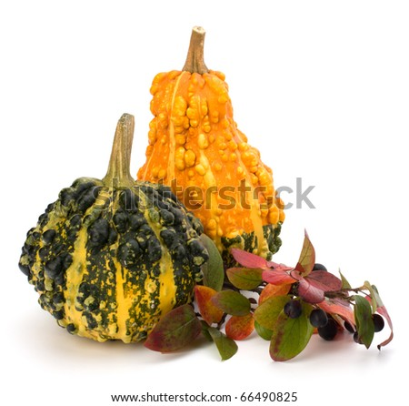 Decorative pumpkin isolated on white background. Halloween and harvest symbol. - stock photo