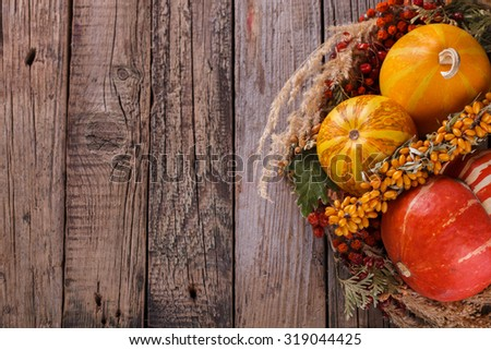 Decorative pumpkins. Autumn still life.Copy space.selective focus - stock photo