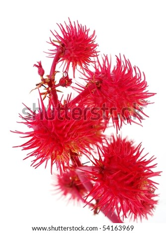 Decorative Red Flower - stock photo
