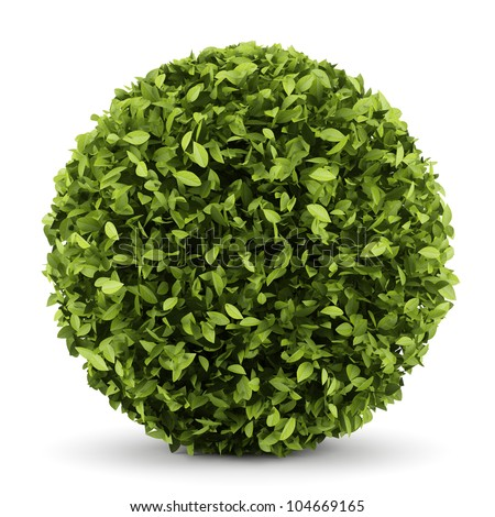 decorative round plant isolated on white background - stock photo