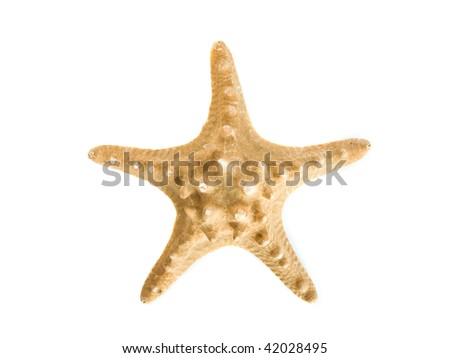 Decorative sea star isolated over white background. - stock photo