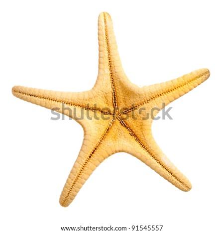 Decorative sea star isolated over white background. - stock photo