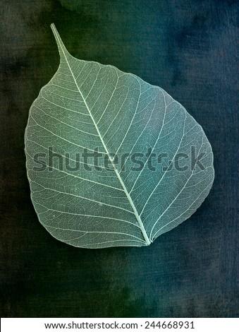 Decorative skeleton leaf isolated - stock photo