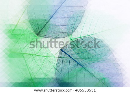 Decorative skeleton leaves, abstract background - stock photo
