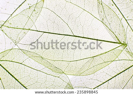 Decorative skeleton leaves background - stock photo
