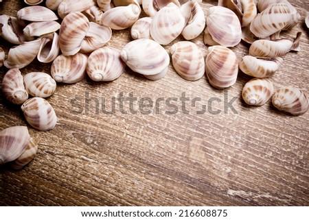 Decorative snail shells on wooden table texture. - stock photo