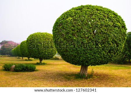 plants pine decorative vintage seeds fresh decoration artificial decor home green trees for bonsai