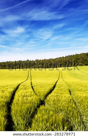 Deep and visible forking tractors tracks in a wheat field. Conceptual image for choosing a path. - stock photo