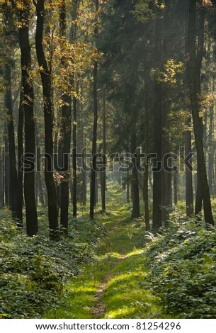 Deep autumn forest in sunny weather Czech republic