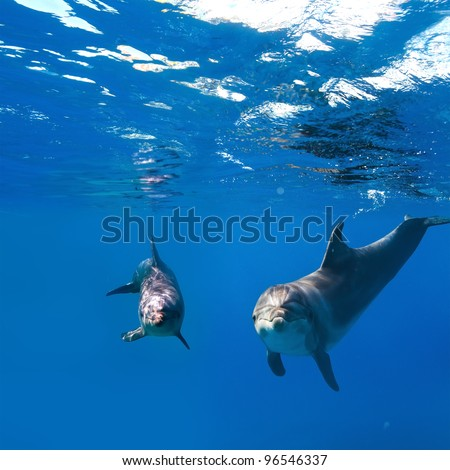 deep blue and water surface with two funny nice dolphins underwater - stock photo