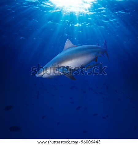 Deep blue ocean water surface dangerous bull-shark highlighting with sunrays looking for victim - stock photo