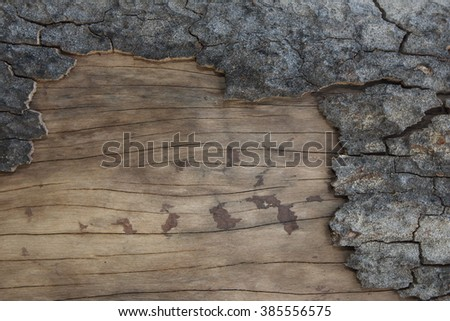 Deep Crack of Bark Surface of Very Old Tree and pealing some part of Bark showing Great Texture of Wood - stock photo