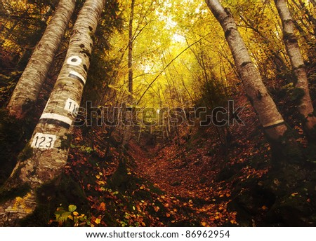 Deep forest golden autumn landscape; Bulgarian Rhodopes mountain in fall time of the year