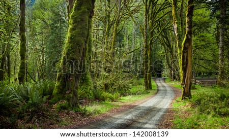 Deep forest in Elwha River Trail, Olympic national park - stock photo
