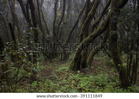Deep forest in Garajonay National Park, La Gomera, Canary Islands, Spain. Selective focus
