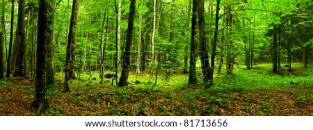 Deep forest Panorama XXL - stock photo