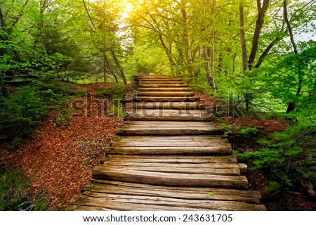 Deep forest pathway in the sunshine. Plitvice lakes, Croatia - stock photo