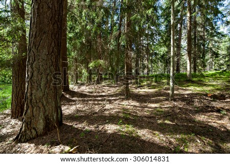 Deep forest view during sunny day - stock photo