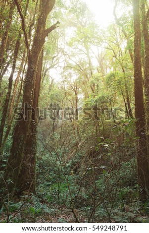Deep forest with soft lighting in Kew Mae Pan, Chom Thong, Chiang Mai, Thailand