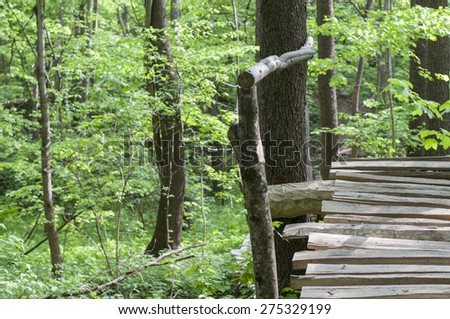 Deep forest wooden pathway. - stock photo