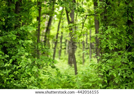 deep green forest with fresh lush foliage leaves and many trees on natural environment background - stock photo
