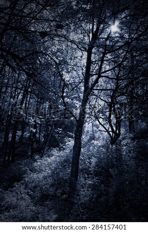 Deep in the forest. Peneda Geres National Park, north of Portugal. Used infrared filter. Toned blue.  - stock photo