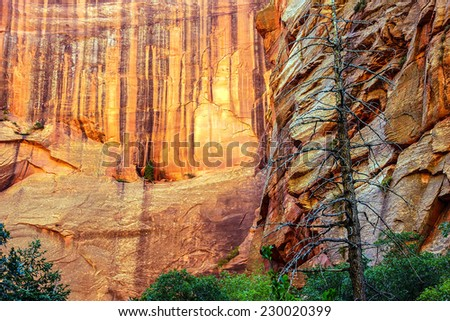 Deep red and orange cliffs in narrow canyon along the Taylor Creek trail, Kolob Canyon, Zion National Park, Utah - stock photo
