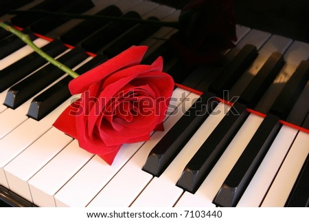 deep Red Rose on Piano keys - horizontal view - stock photo