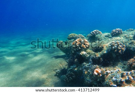 Deep sea and coral reef, coral reef animals, fresh corals at the bottom of the sea, sea ecosystem, coral reef life, colorful corals, yellow corals, green corals, sea landscape, oceanic landscape - stock photo