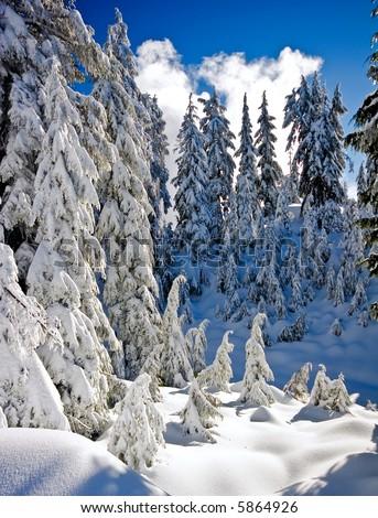 Deep Snow - stock photo