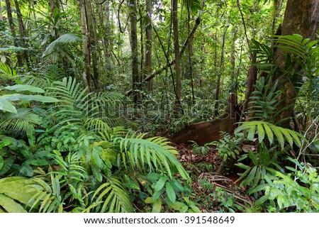 Deep wet jungle in Ko Kood island, Thailand - stock photo