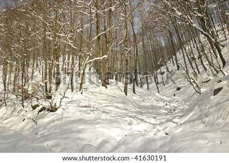 Deep white forest snow.