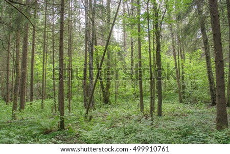 Deep wild forest. Northern Asia